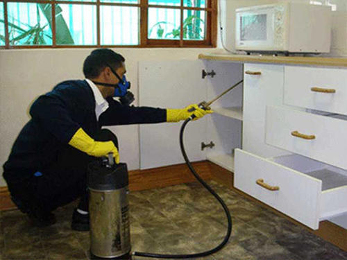 Residential Fumigation Services