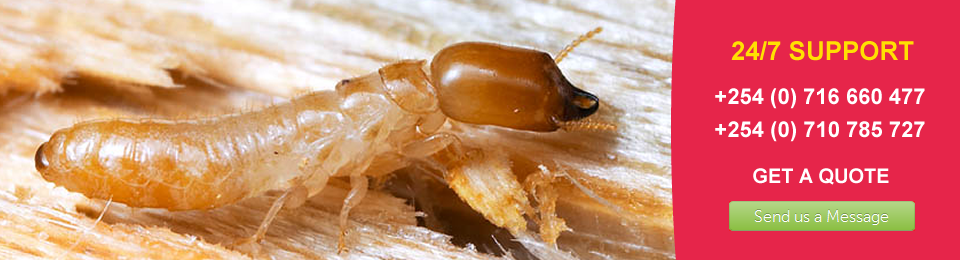 Termites are Real